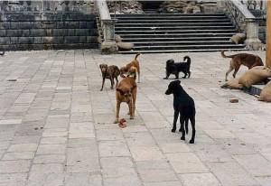 Balkans_War_1991,_Dubrovnik_-_Flickr_-_Peter_Denton_丕特_._天登